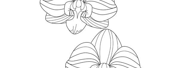 Orchid Template – Medium